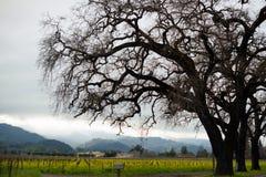 Van de de Valleiwijngaard van landschapsnapa van de heuvels ruwe bloemen de lenteluxuriou Stock Fotografie