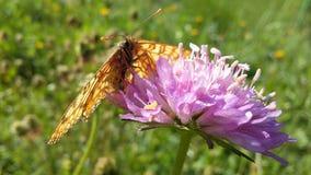 Van de de vlinderbloem van het insectenleven de lichte zonneschijn Stock Foto