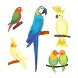 Van de de vogel vectorillustratie van de beeldverhaal de tropische papegaai wilde dierlijke van de het wildveer levendige aard va Royalty-vrije Stock Fotografie