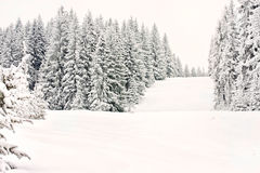 Van de de winter bosski van de berg de sneeuwbaan Royalty-vrije Stock Afbeeldingen