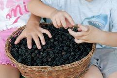 Van de de zomerinzameling van jongensjongens de oogst jonge kinderen buiten van het de braambessenfruit van mensenbraambessen van Royalty-vrije Stock Afbeeldingen