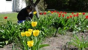 Van de de zorglente van het vrouwenmeisje de tulpenbloemen in binnenplaats stock footage