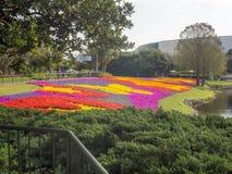 Van de Epcotbloem & Tuin Festival Disney Royalty-vrije Stock Afbeeldingen