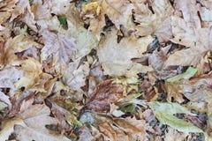 Van de herfstbladeren natuurlijke kleuren als achtergrond Stock Foto