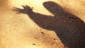 Van de het asfaltvogel van de schaduwmens het Symbool hd lengte stock footage
