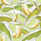 Van de het blad grafische groene gele kleur van het banaanfruit van de het patroonschets naadloze de illustratievector stock illustratie