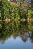 Van de het Landschapsbezinning van de aardzomer het Water en de Bomen stock afbeelding