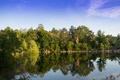 Van de het Landschapsbezinning van de aardzomer het Water en de Bomen royalty-vrije stock fotografie