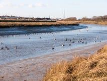 van de het landschapsmening van de stroomrivier estuarium van de het waterkust het blauwe essex met Stock Afbeeldingen