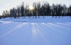 van de het parktuin van de de wintersneeuw van het de zonzonlicht de schaduwbomen Stock Foto