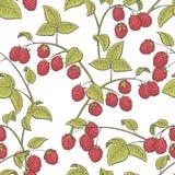 Van de het patroonschets van de frambozen grafische rode groene kleur naadloze de illustratievector Royalty-vrije Stock Afbeelding
