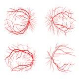 Van de het systeem x ray angiografie van de oogader het vastgestelde vector geïsoleerde ontwerp vector illustratie