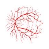 Van de het systeem x ray angiografie van de oogader vectordieontwerp op whit wordt geïsoleerd vector illustratie