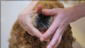 Van de hond nat snuit en neus close-up bij badkuip stock video