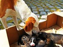 van de honden hd huisdieren van het hondpuppy de dierenhuisdier Stock Foto's