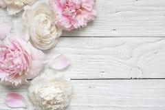 Van de huwelijksuitnodiging of verjaardag groetkaart of de kaartmodel van de Moeder` s Dag met roze en romige pioenen wordt verfr stock foto's