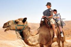 Van de kameelrit en Woestijn Activiteiten in Judean Des Stock Afbeelding