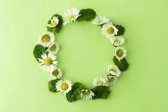 Van de kamillebloem en munt de kruiden omcirkelen kader op groen, voor thee of ontwerp De zomer groene achtergrond met exemplaarr stock fotografie