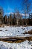 Van de kant van de weg, het Provinciale Park van de Schapenrivier, Alberta, Canada royalty-vrije stock foto