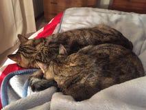 Van de kattenbroer en zuster slaap Stock Afbeelding