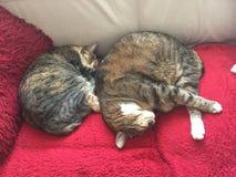 Van de kattenbroer en zuster slaap vreedzaam samen Stock Afbeelding