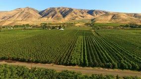Van de de kersenboomgaard van de Yakimavallei het landbouwbedrijflandbouw stock videobeelden