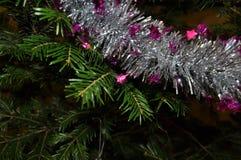 Van de Kerstmis achtergrond en pijnboom takken Royalty-vrije Stock Foto