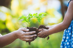 Van de kindmeisje en ouder holdingsjonge plant in handen stock afbeelding