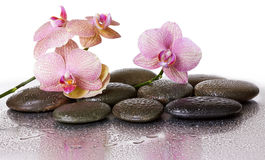 Van de kuuroordstenen en orchidee bloemen en zwarte stenen Stock Afbeeldingen
