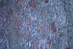 Van de Madrone (Arbutus-menziesii) Boom de Schors Macroschot Stock Fotografie