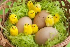 Van de mand de gele kuikens van Pasen gespikkelde eieren Stock Foto's