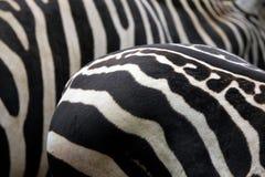 Van de Maneless de gestreepte (Equus-quaggaborensis) huid textuur Stock Foto