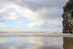 Van de meeuwen natte zand en klip bezinningen Royalty-vrije Stock Fotografie