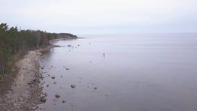 Van de de Oostzeekust van Rojaletland video van de de hommel hoogste mening 4K UHD de Lucht stock video