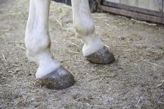 Van de paardvoeten hoef Royalty-vrije Stock Foto