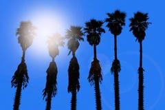 Van de palmenwashingtonia van Californië westelijk de brandingsaroma Royalty-vrije Stock Fotografie