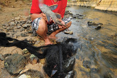 Van de Plecostomus (uitlopersvissen) de vreemde specie uitbarsting in rivier Stock Afbeelding