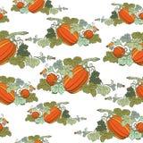 Van de pompoen naadloos patroon Als achtergrond Stock Afbeelding