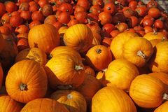 Van de pompoen (Pompoen) de oogst in de herfst Stock Afbeelding