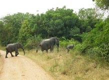 Van de rijmoeder en baby Afrikaanse olifanten die spoor Nationaal Park kruisen Royalty-vrije Stock Afbeelding