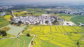 Van de stadscanola van Nanjingsyaxi het internationale langzame pastorale landschap landbouw royalty-vrije stock afbeelding