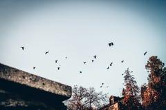 Van de de stadshemel van vliegvogels van de de kleurenliefde de herfst coldtimesoul koude stock afbeelding