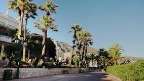 Van de de stadsstad van Monaco van de de straatpalm van Monte Carlo de zonnige dag stock footage