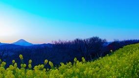 Van de tijdspannecanola van de zonsondergangtijd de de bloemtuin bij Azumayama-park in Shounan Kanagawa schoot wijd panning stock footage