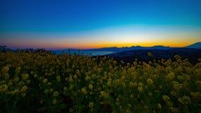 Van de tijdspannecanola van de zonsondergangtijd de de bloemtuin bij Azumayama-park in Shounan Kanagawa schoot wijd schuine stand stock footage