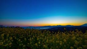Van de tijdspannecanola van de zonsondergangtijd de bloemtuin bij Azumayama-park in Shounan wijd geschotene Kanagawa stock footage