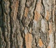 Van de van de achtergrond schorstextuur oude bruin patroonbarst voor ontwerp Royalty-vrije Stock Foto