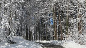 Van de de wegtrog van de provincie het sneeuwbos stock footage