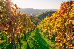 Van de Wijn de in openlucht Dag Veranderende Seizoenen van wijngaardrijen de Dalingsherfst royalty-vrije stock foto