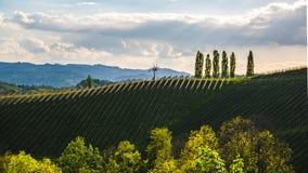 Van de Wijngaardensulztal van Oostenrijk van de de Zuid- wijnstraat het gebieds Stiermarken, wijnland De bestemming van de toeris stock afbeeldingen
